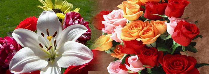 Flores Especiales Oroepsa 3