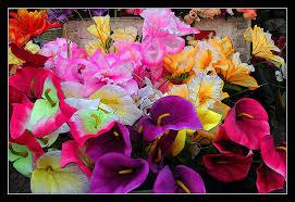 Flores Especiales Oropesa 4